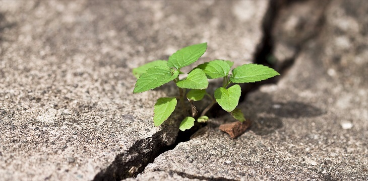plant growing through crack in pavement